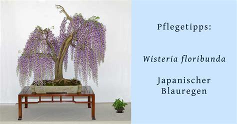bonsai schneiden anleitung 4419 bonsai schneiden anleitung bonsai schneiden anleitung und