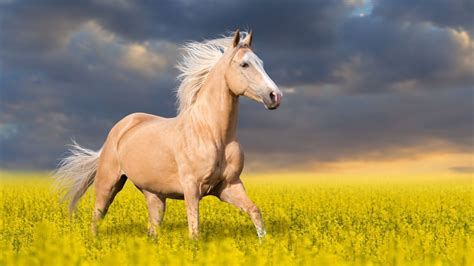 animal horse wallpaper hd wallpapers