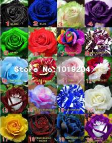 different colors of roses 200pc bonsai seeds 20 mix varieties of different