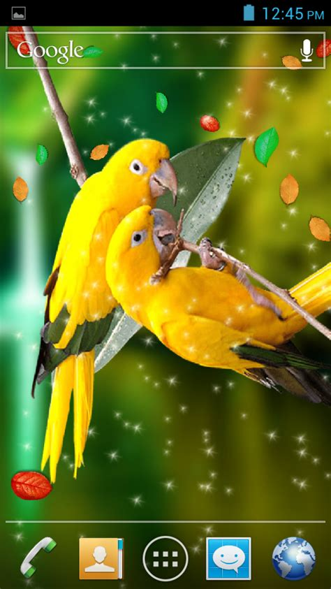 birds   wallpaper android apps  google play