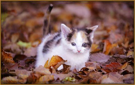 fotos muy bonitas de gatos imagenes de felinos para descargar los gatitos m 225 s