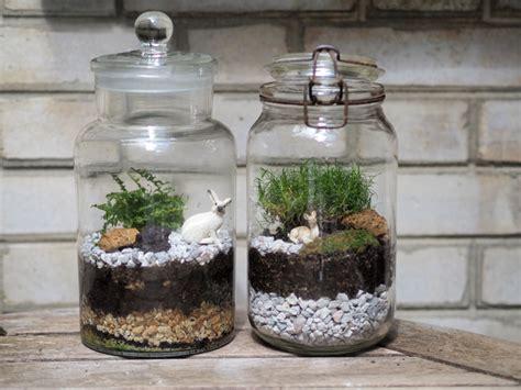 tutoriel terrarium plante