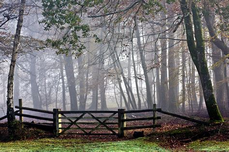 Forest Fencing Trellis New Forest Fence Flickr Photo