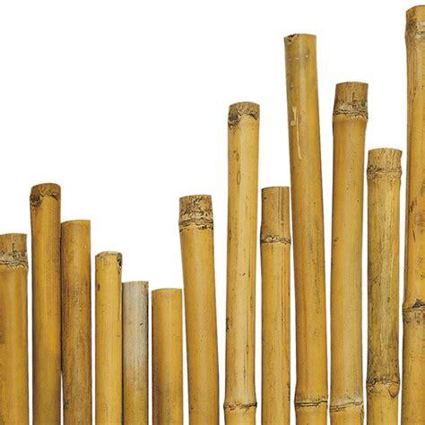 canne bambu da arredo canne in bamb 249 verdelook biacchi ettore