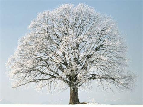 imagenes invierno wasap paisajes de invierno para portada de facebook o fondo de