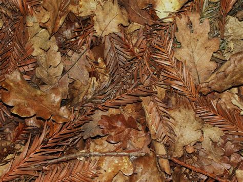 Dead Of Autumn dead leaves images search