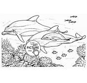Dolphin Animal Coloring Pages  T8lscom