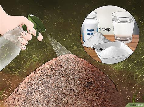 come sterminare le formiche in casa come eliminare le formiche all esterno 11 passaggi