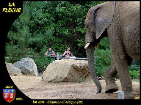 Zoo La Fleche Hebergement 3055 by Photo 224 La Fl 232 Che 72200 Le Zoo La Fl 232 Che 78421