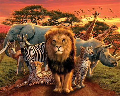 Where All The Animals by Kingdom Animals Mini Poster 50x40