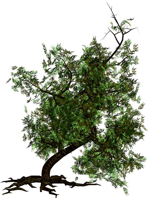 trees images tree png images pictures download free
