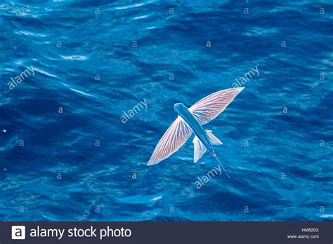 what is the scientific name for air pictures of fish in the and names impremedia net