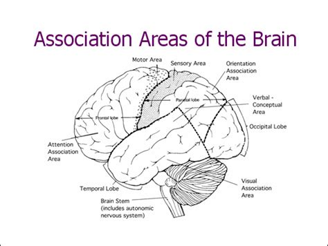 memory section of the brain part of brain responsible for emotions and feelings crafts