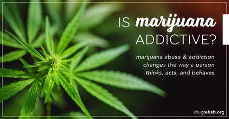 Gallup Detox Phone Number by Is Marijuana Addictive