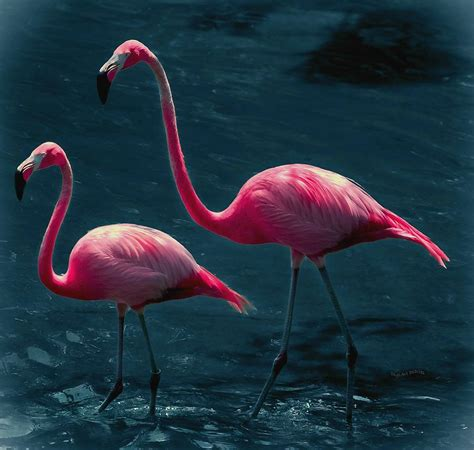 pink flamingos very pink flamingos digital art by digiart diaries by