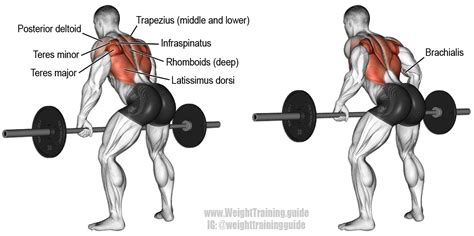 Barbel Fitness bent barbell row a major compound pull exercise