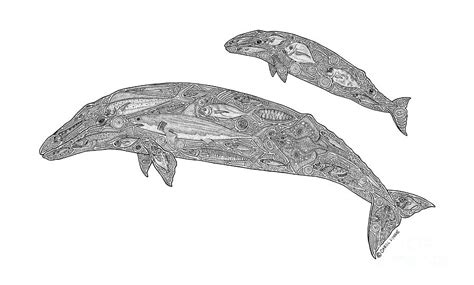 gray whale and calf drawing by carol lynne