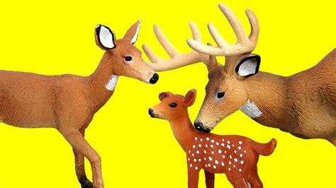 deer family baby deer mommy deer   daddy deer playing toy deer cute animals