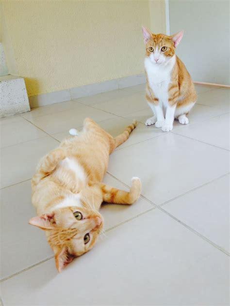 coco s rescue cocos cat rescue playa quintana roo
