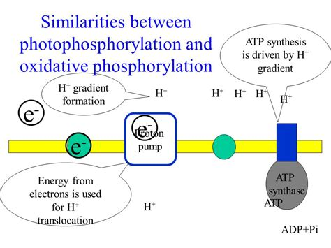 energy driven pattern formation atp synthesis is driven by h gradient h gradient