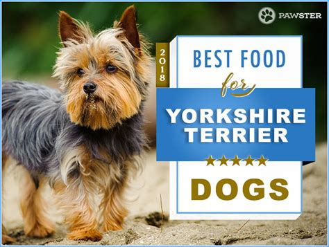 best yorkie food top 6 recommended best foods for a yorkie