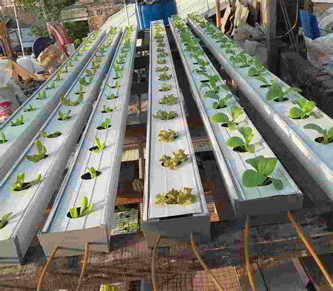 cara membuat hidroponik tetes berbagai macam cara menanam hidroponik