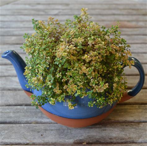 Large Teapot Planter by Planters Blue Glazed Large Teapot Planter