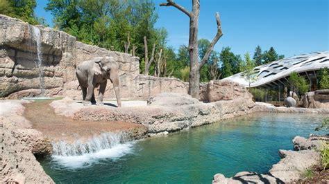 Foto Fur Bewerbung Zurich Elefantenpark Zoo Z 252 Rich Mehr Platz F 252 R Die Gr 246 Ssten Schweiz Tourismus
