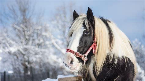 wallpaper hd 1920x1080 horses winter horses pictures wallpaper 53 images