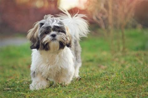 10 best big dog breeds for families babble pets 10 best small dog breeds for families