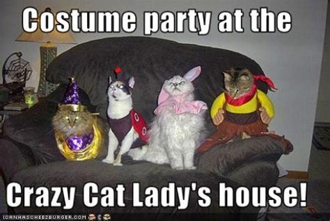 Halloween Birthday Meme - 11 best pics of the crazy cat lady meme