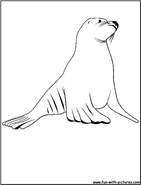 coloring pages sea lions sea lion coloring page