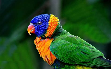 colorful macaw wallpaper macaw parrot hd wallpapers macaw pictures hd images hd