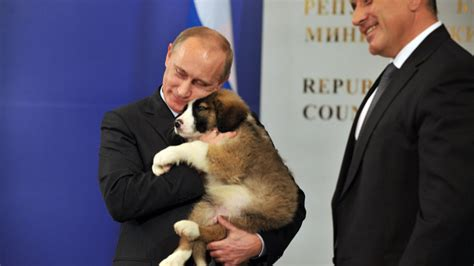 putin puppy why are foreign governments bombarding putin with puppies