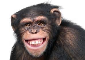 Funny monkey smiling 11 unforgettable animal smiles