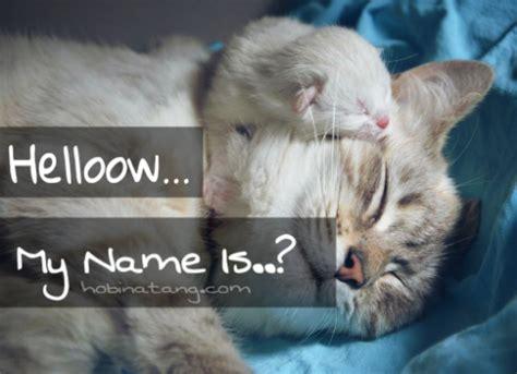 100 nama bayi laki 100 nama untuk kucing laki laki dan perempuan yang bagus