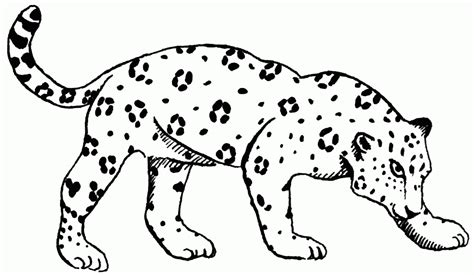 cute jaguar coloring pages pictures of baby jaguars kids coloring