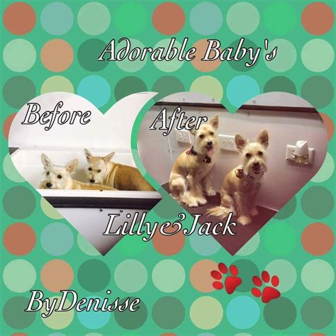mobile grooming san antonio rigsby pet grooming and boarding in san antonio rigsby pet grooming and boarding