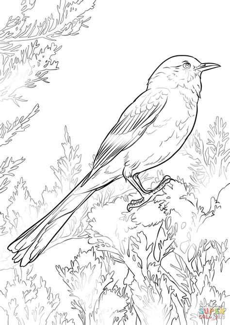 mockingbird coloring pages mockingbird coloring page