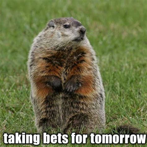 groundhog day australia speak of the of the planet of the groundhogs