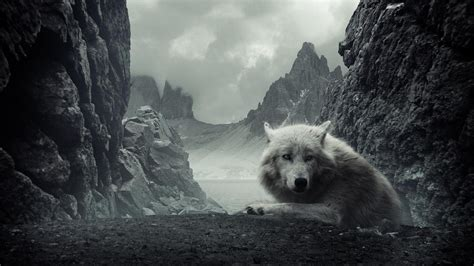 black and white wolves wallpaper best wallpaper hd 1080p free download 1366 215 768 wolf