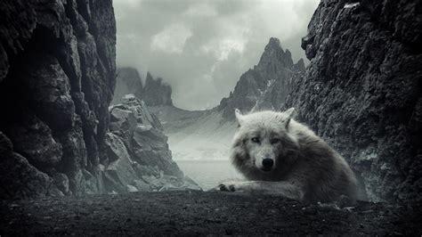 black and white wolf 17 desktop wallpaper best wallpaper hd 1080p free download 1366 215 768 wolf