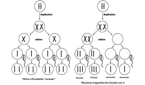 chromosome y supplementaire trisomie 21 sur la piste de la th 233 rapie chromosomique