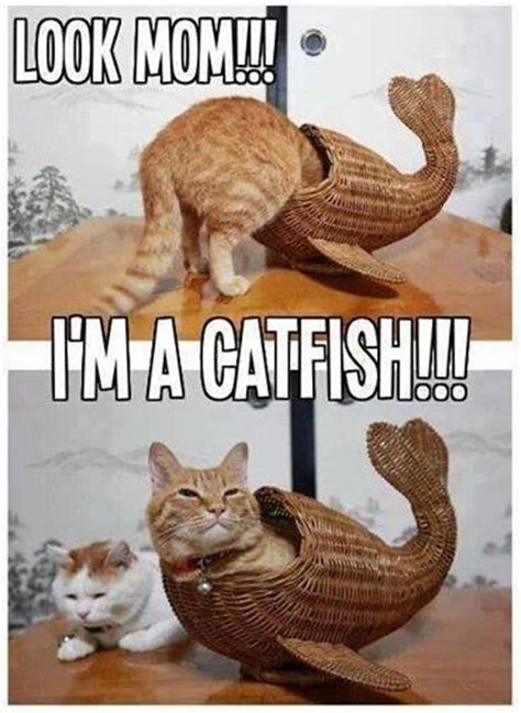 Cat Mom Meme - catfish funny pictures quotes memes jokes