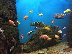 nettoyer les d 233 cors d aquarium adjective army