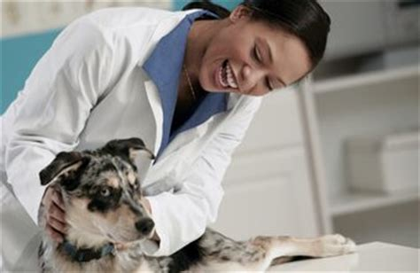 Kennel Assistant Salary by What Schooling Is Required For A Vet Tech Chron