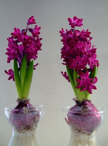 fresh beautiful indoor plant ideas for eco friendly 23201 flowers in winter ecotulips