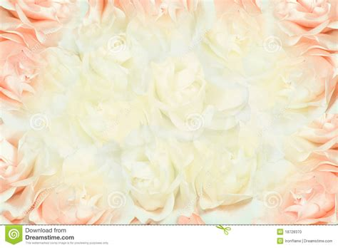 white and pink pink and white roses background stock photo image 18728370
