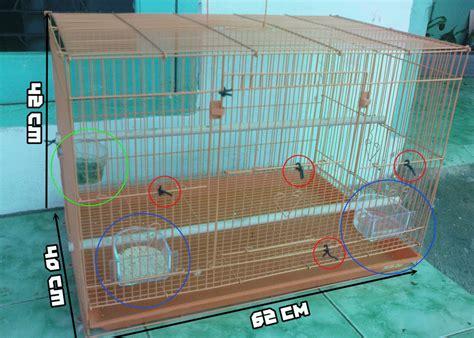 Harga Pakan Burung Kenari Yang Bagus tips burung kenari bernafas panjang kicau burung