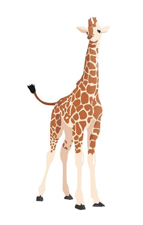 flat giraffe vector toffuco ilustraciones de animales